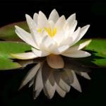 Oct 11-Nov 14: Online Class - Prayer & Meditation