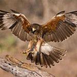 February 16th: Hawk Watch